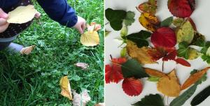 Sammeln und Blätter