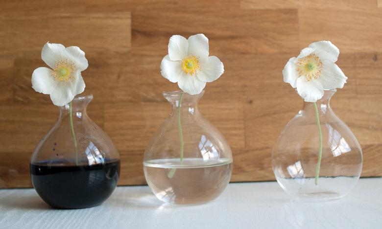 experiment wir f rben blumen mit lebensmittelfarben. Black Bedroom Furniture Sets. Home Design Ideas