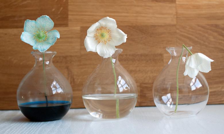 Experiment Wir färben Blumen mit Lebensmittelfarben